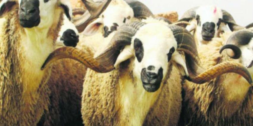 Maroc le 1er salon national professionnel du sardi arrive for Presse agrume professionnel maroc
