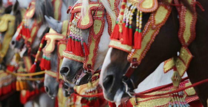 La 10e dition du salon du cheval d 39 el jadida du 17 au 22 for Salon du cheval montpellier 2017
