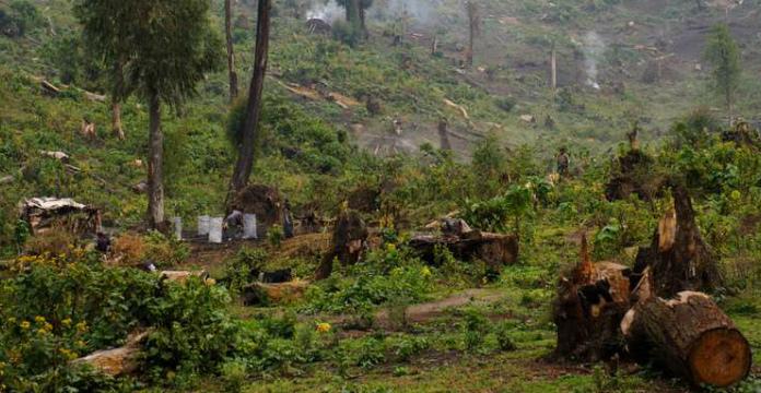 Réattribution de concessions forestières à des Chinois malgré un moratoire — RDC