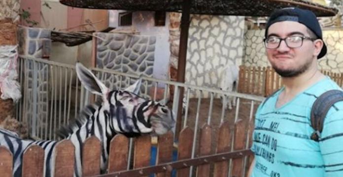 Un âne 'maquillé' en zèbre dans un zoo — Egypte