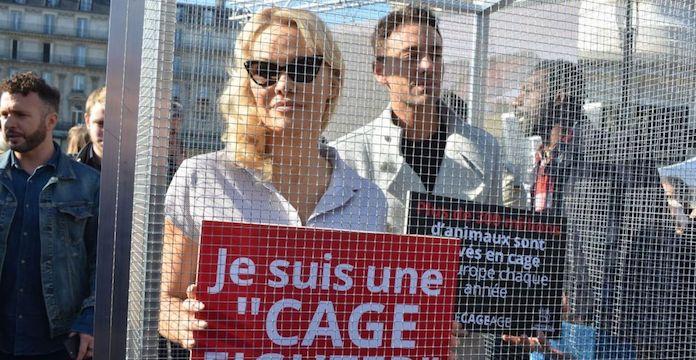 ONG contre l'élevage des animaux en cage